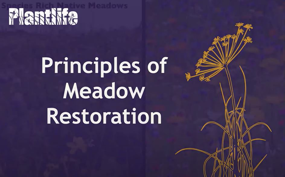 Plantlife webinar