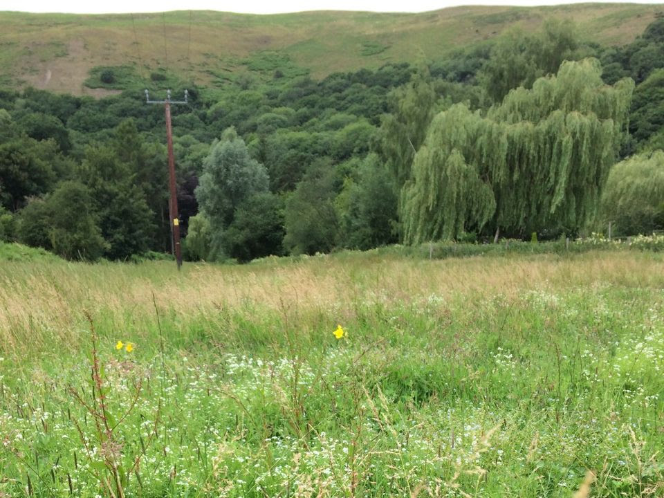 View of Meadow