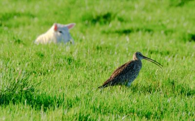 Curlew Country Training Day – for other projects, Wednesday 20th November
