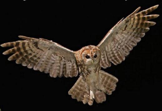 A New Book! Shropshire Bird Sites