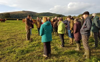Farm Walk at Partridge Farm