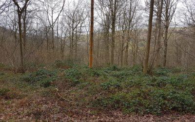 Woodland Walk at Horderley